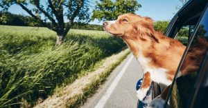 Dogs in Cars, Getting There Safely